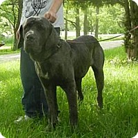 Adopt A Pet :: Tank ADOPTED!! - Antioch, IL