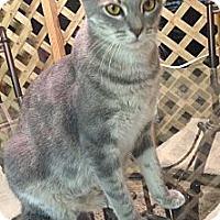 Adopt A Pet :: Buster - Harvey, LA