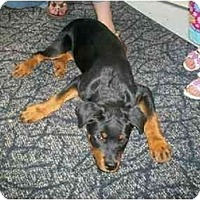 Adopt A Pet :: Max - Evansville, IN