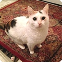 Adopt A Pet :: Lovey - Vancouver, BC