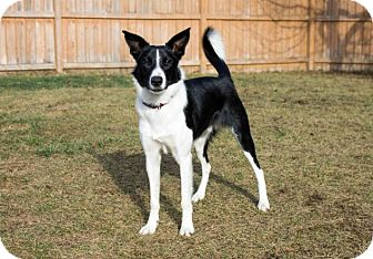 Border Collie Mix Dog for adoption in Saskatoon, Saskatchewan - Rio