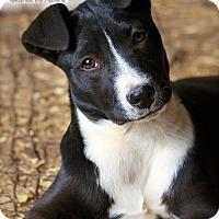 Adopt A Pet :: Melba - Albany, NY