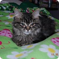 Adopt A Pet :: Rubeus Hagrid - Bentonville, AR