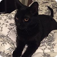 Adopt A Pet :: Davis - Chicago, IL