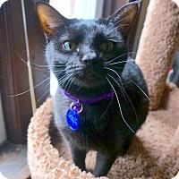 Adopt A Pet :: Melanie - St. Louis, MO