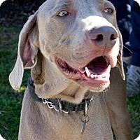 Adopt A Pet :: Cody - Sun Valley, CA