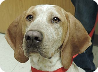 Hound (Unknown Type) Mix Dog for adoption in Sioux City, Iowa - LUCY