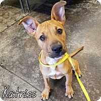 Adopt A Pet :: Katnis - Newcastle, OK