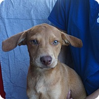 Adopt A Pet :: Cody - Oviedo, FL