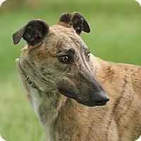 Adopt A Pet :: Ethyl - Portland, OR