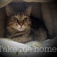 Adopt A Pet :: Bebe - Spokane, WA