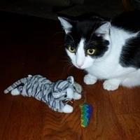 Adopt A Pet :: Jolie - Verona, WI