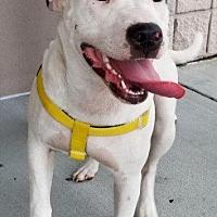 Adopt A Pet :: Luna - New Bern, NC