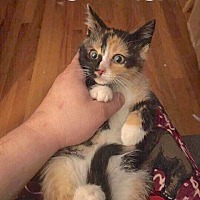 Adopt A Pet :: Sangria - Fowlerville, MI