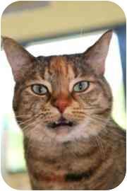 Domestic Mediumhair Cat for adoption in Walker, Michigan - Autumn