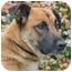 Photo 1 - German Shepherd Dog/Labrador Retriever Mix Dog for adoption in Los Angeles, California - Teresa von Thuringen