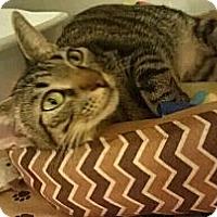 Adopt A Pet :: Liza - Columbus, GA