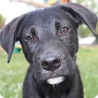 Adopt A Pet :: Hammer - Foster, RI
