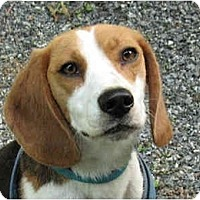 Adopt A Pet :: Raina - Adopted! - Blairstown, NJ