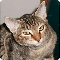 Adopt A Pet :: Maggie - lake elsinore, CA