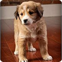 Adopt A Pet :: Rosemary - Owensboro, KY