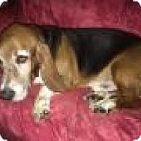 Adopt A Pet :: Wooly Boy - Albuquerque, NM