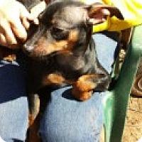 Adopt A Pet :: Abel - Marietta, GA