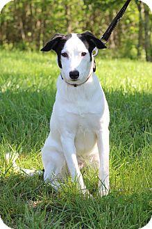 Border Collie Mix Dog for adoption in Waldorf, Maryland - Buddy