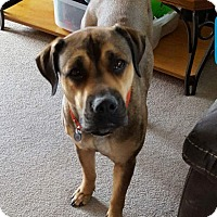 Adopt A Pet :: Chloe - Evergreen Park, IL