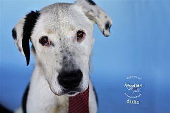 Border Collie Mix Dog for adoption in Castaic, California - Duke