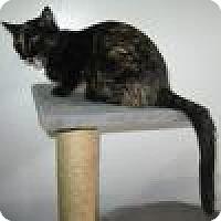Adopt A Pet :: Cameo - Powell, OH