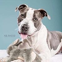 Adopt A Pet :: Bruno - Homewood, AL