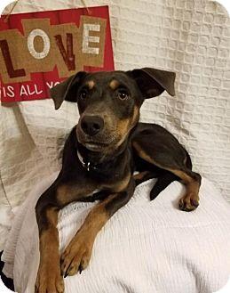 Doberman Pinscher Mix Dog for adoption in Elkton, Maryland - Brittney