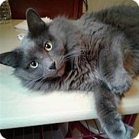 Adopt A Pet :: Gracie Starr - New  York City, NY