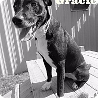 Terrier (Unknown Type, Small) Mix Dog for adoption in Van Wert, Ohio - Gracie