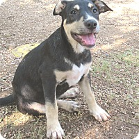 Adopt A Pet :: Roxy - Godley, TX