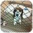 Photo 2 - Beagle Mix Dog for adoption in Phoenix, Arizona - Abby June