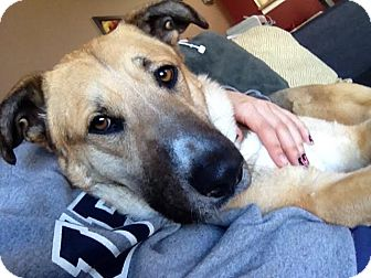 Shepherd (Unknown Type) Mix Dog for adoption in Vancouver, British Columbia - Spanky