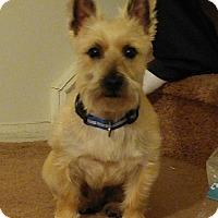 Adopt A Pet :: Riley - Bordentown, NJ - New Jersey, NJ