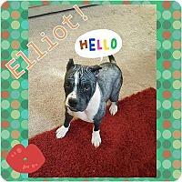 Adopt A Pet :: Elliot - Sacramento, CA
