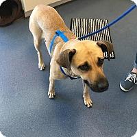 Adopt A Pet :: Elizabeth - Jupiter, FL