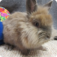 Adopt A Pet :: Paddington - Newport, DE
