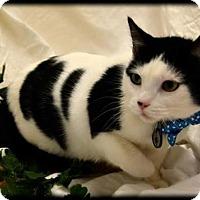 Adopt A Pet :: Starlight - Orlando, FL