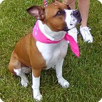 Adopt A Pet :: Diamond - Adoption pending - Tipp City, OH