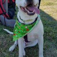 Adopt A Pet :: Cordell - justin, TX