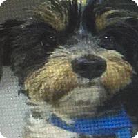 Adopt A Pet :: ROXY - Palm Desert, CA