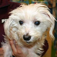 Adopt A Pet :: Shaggy - Concord, CA