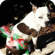 Bulldog Mix Dog for adoption in Austin, Texas - Sweet Annie