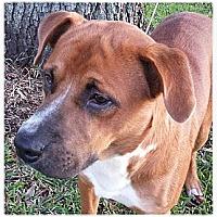 Adopt A Pet :: Hutch - Silsbee, TX