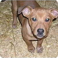 Adopt A Pet :: Bud - Glastonbury, CT